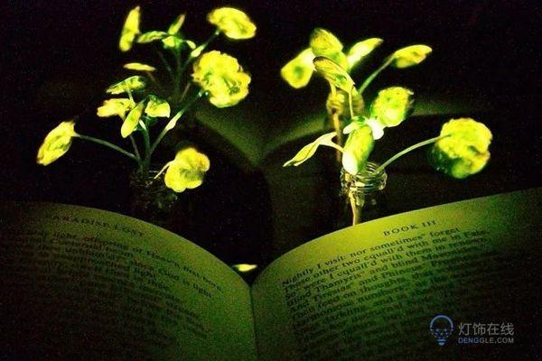 让植物自动发光来提供照明,或将取代多数灯具