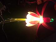 七彩灯笼花